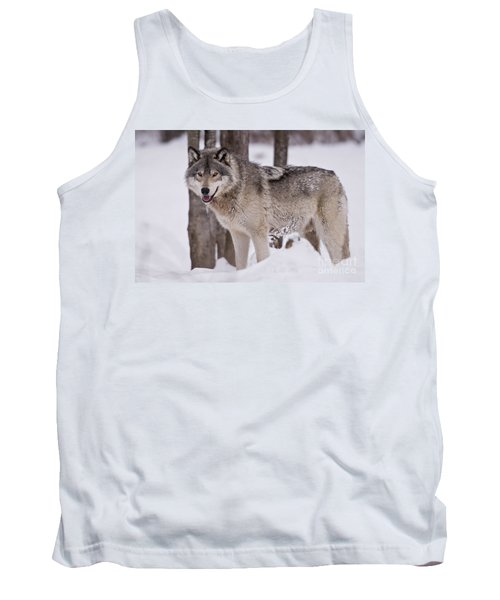 Timber Wolf In Winter Tank Top
