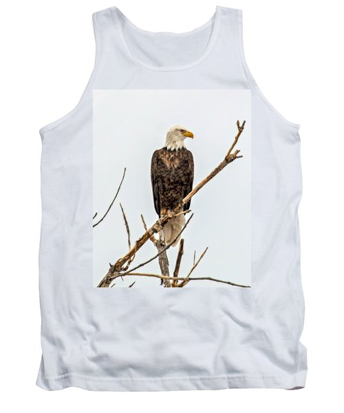 Bald Eagle On A Branch Tank Top