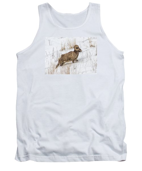Bighorn In Yellowstone Tank Top by Alan Toepfer