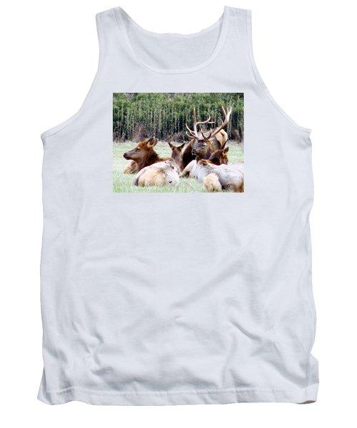 Bull Elk And His Girls 2 Tank Top