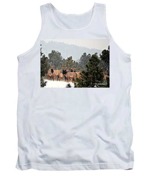Tank Top featuring the photograph Elk In The Snowing Open by Barbara Chichester