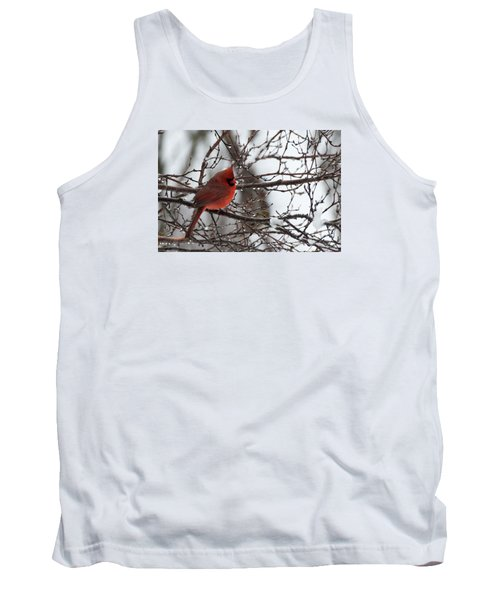 Northern Red Cardinal In Winter Tank Top