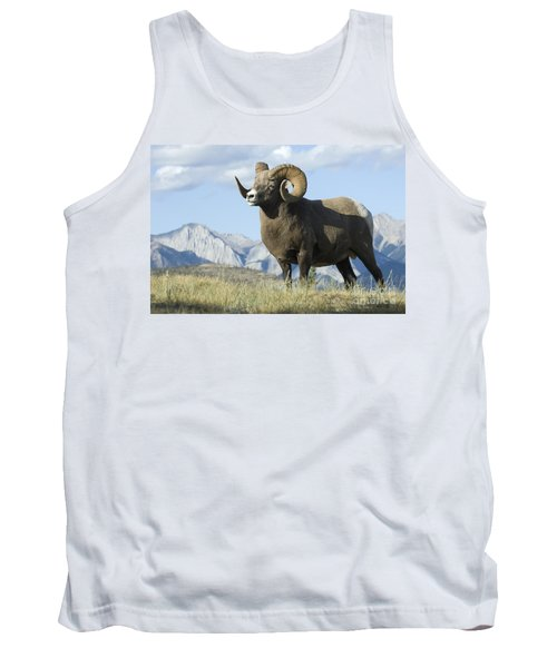 Rocky Mountain Big Horn Sheep Tank Top by Bob Christopher