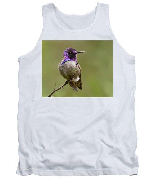 Costa's Hummingbird, Solano County California Tank Top