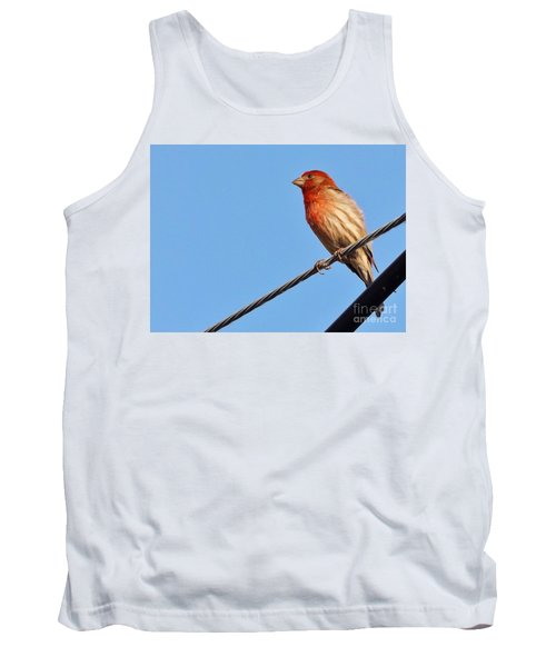 American Crossbill On Wire     Spring   Indiana   Tank Top by Rory Cubel