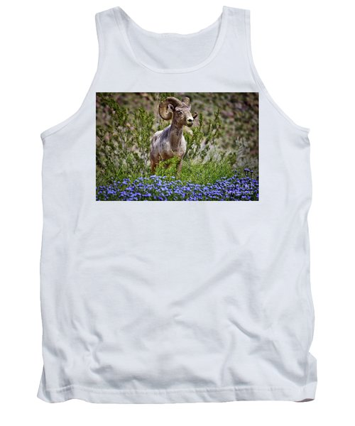 Blooms And Bighorn In Anza Borrego Desert State Park  Tank Top