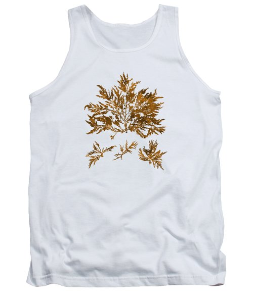 Tank Top featuring the mixed media Brown Seaweed Marine Art Chylocladia Clavellosa by Christina Rollo