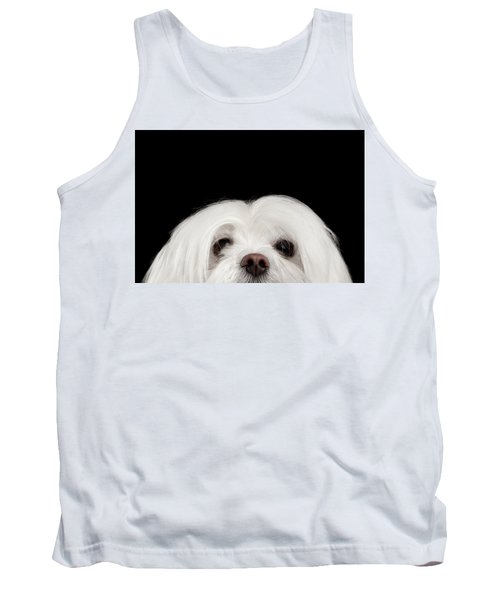 Closeup Nosey White Maltese Dog Looking In Camera Isolated On Black Background Tank Top