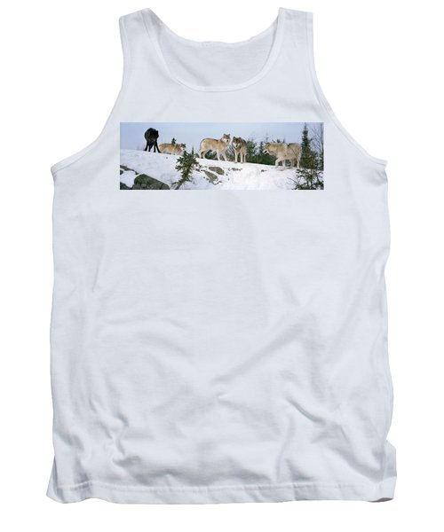 Gray Wolves Canis Lupus In A Forest Tank Top