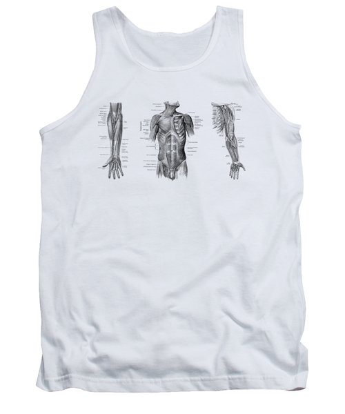 Male Upper Body Muscular System - Multi-view - Vintage Anatomy Tank Top