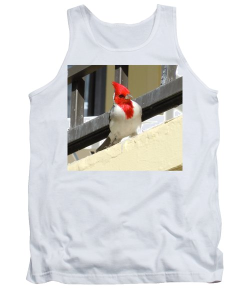 Red-crested Cardinal Posing On The Balcony Tank Top