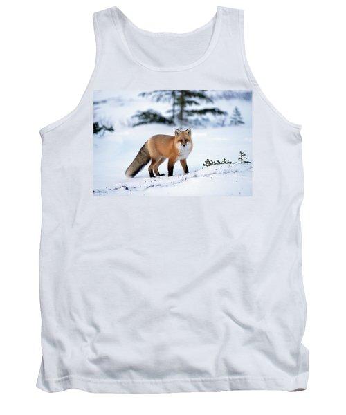 Red Fox Vulpes Vulpes Portrait Tank Top