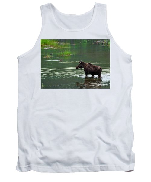 young Moose in spring pond Tank Top