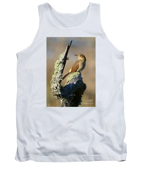 The Hermit Thrush Tank Top by Kathy Baccari