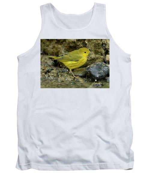 Yellow Warbler Tank Top by Doug Herr