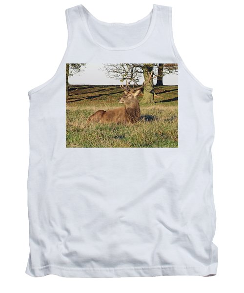 28/11/18  Tatton Park. Stag In The Park. Tank Top