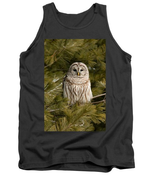 Barred Owl In A Pine Tree. Tank Top by Michel Soucy