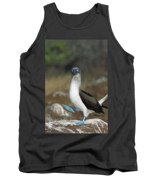 Blue-footed Booby Courtship Dance Tank Top by Tui De Roy