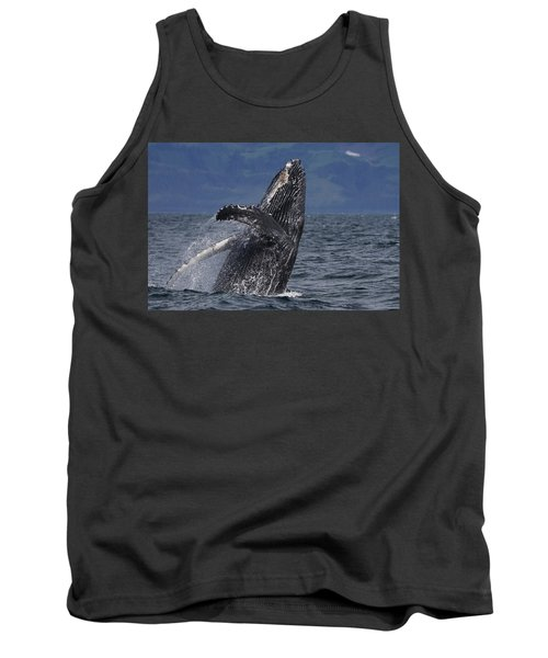 Humpback Whale Breaching Prince William Tank Top