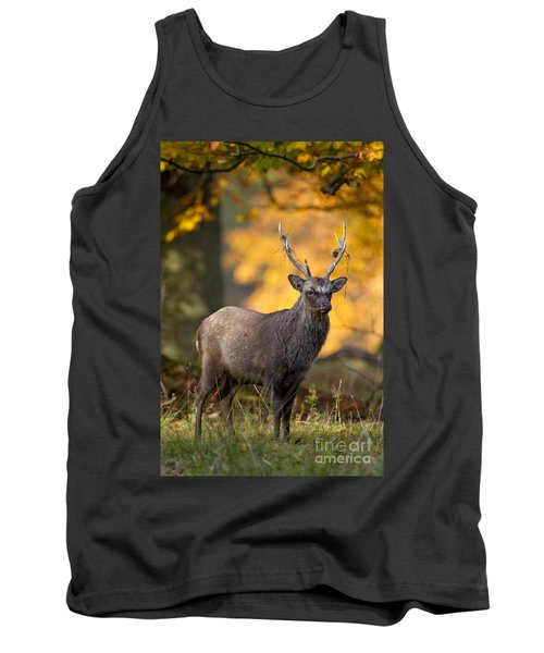 110307p073 Tank Top by Arterra Picture Library