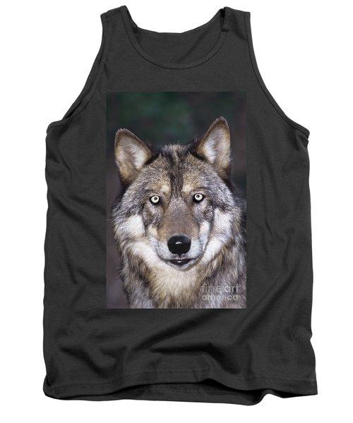 Gray Wolf Portrait Endangered Species Wildlife Rescue Tank Top