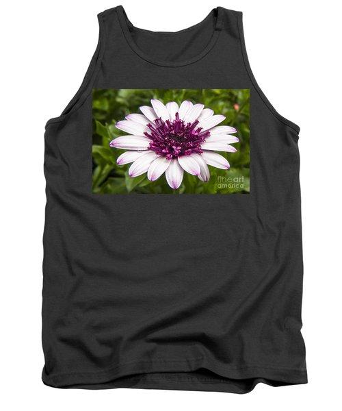 3d Berry White Cape Daisy - Osteospermum  Tank Top