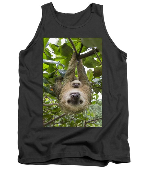 Hoffmanns Two-toed Sloth And Old Baby Tank Top