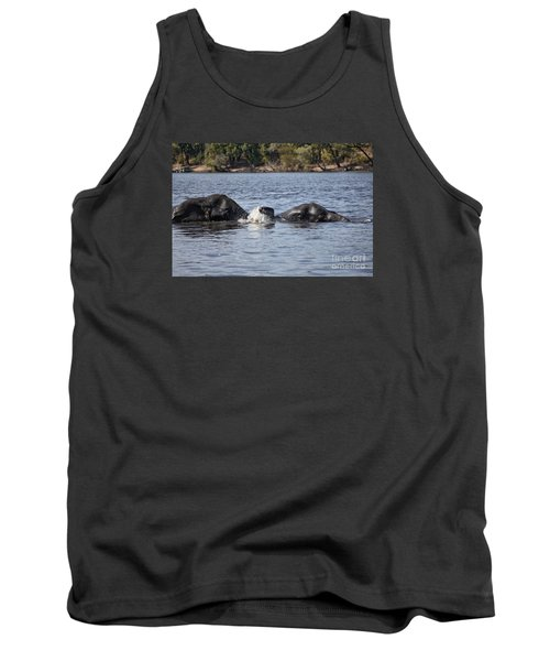 African Elephants Swimming In The Chobe River Botswana Tank Top