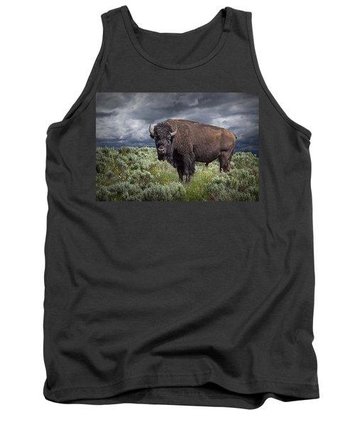 American Buffalo Or Bison In Yellowstone Tank Top