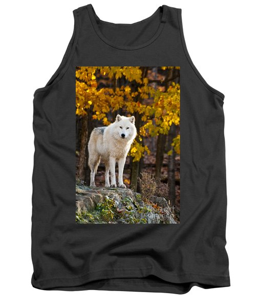 Arctic Wolf Pictures 709 Tank Top