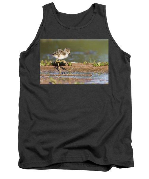 Baby Black-necked Stilt Exploring Tank Top by Bryan Keil