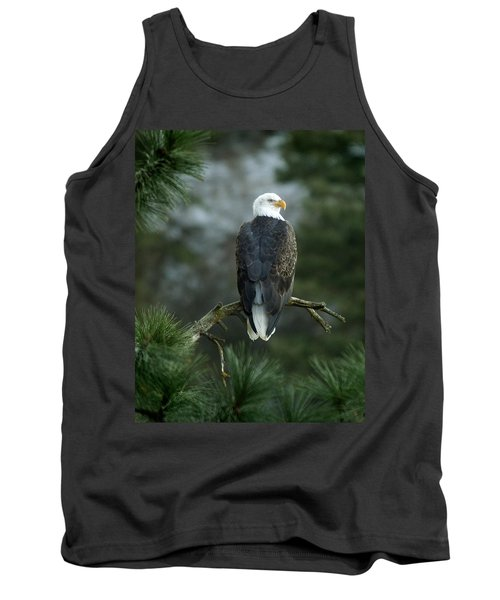 Bald Eagle In Tree Tank Top