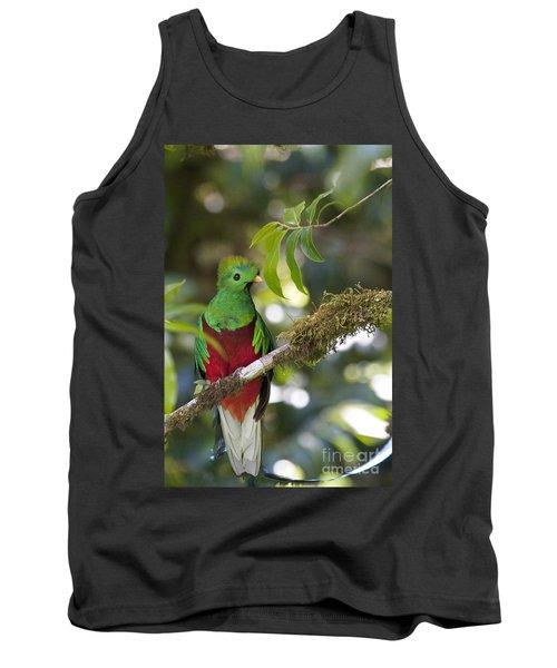 Beautiful Quetzal 1 Tank Top