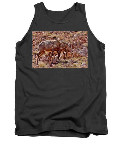Tank Top featuring the photograph Bighorn Canyon Sheep Trio by Janice Rae Pariza
