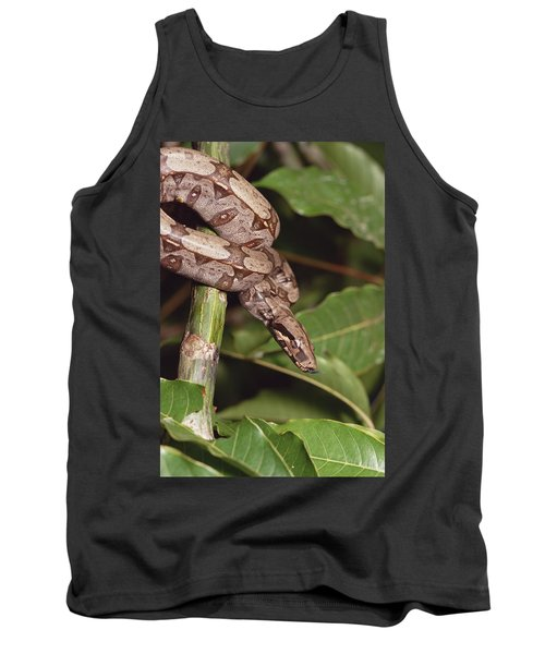 Boa Constrictor Coiled South America Tank Top