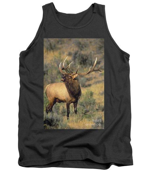 Bull Elk In Rut Bugling Yellowstone Wyoming Wildlife Tank Top