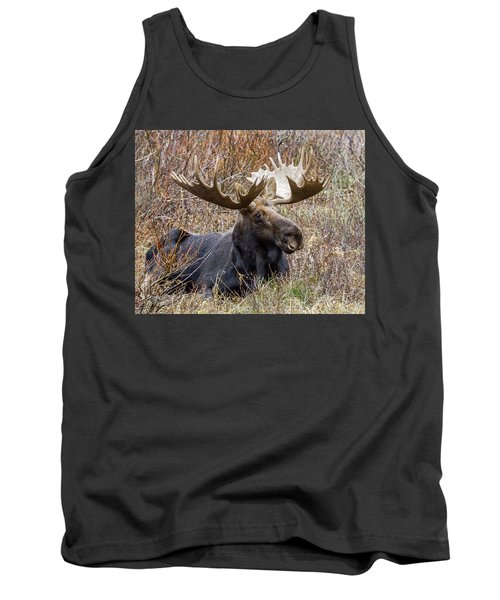 Bull Moose In Autumn Tank Top by Jack Bell