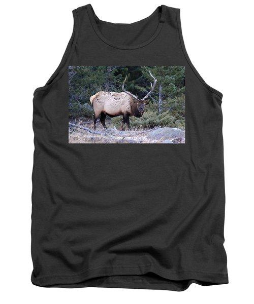 Colorado Bull Elk Tank Top