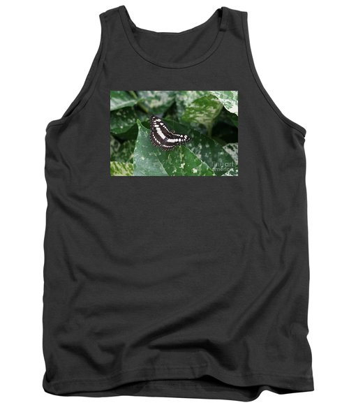 Common Sergeant Butterfly Tank Top