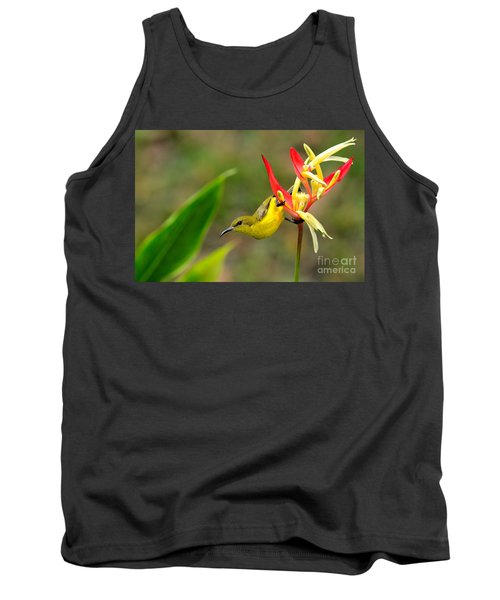 Female Olive Backed Sunbird Clings To Heliconia Plant Flower Singapore Tank Top