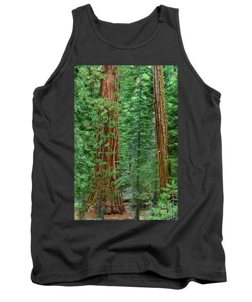 Giant Sequoias Sequoiadendron Gigantium Yosemite Np Ca Tank Top by Dave Welling