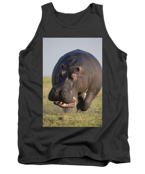 Hippopotamus Bull Charging Botswana Tank Top by Vincent Grafhorst