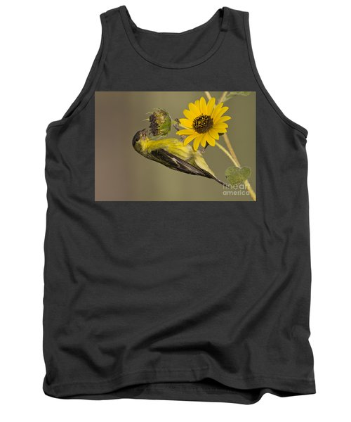 Lesser Goldfinch On Sunflower Tank Top