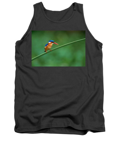 Malachite Kingfisher Tanzania Africa Tank Top by Panoramic Images