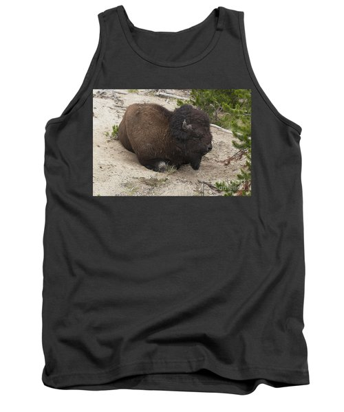 Male Buffalo At Hot Springs Tank Top by Belinda Greb
