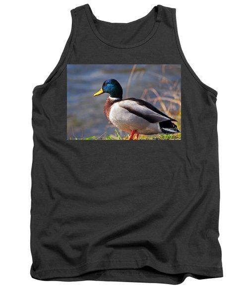 Male Mallard Duck Tank Top by Susan Wiedmann