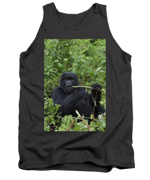 Mountain Gorilla Eating Wild Celery Tank Top
