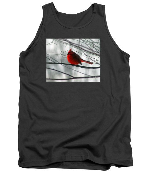 Red Cardinal On Winter Branch  Tank Top