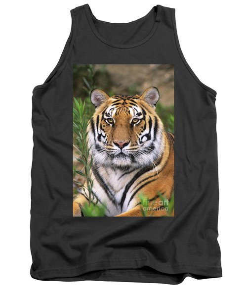 Siberian Tiger Staring Endangered Species Wildlife Rescue Tank Top by Dave Welling