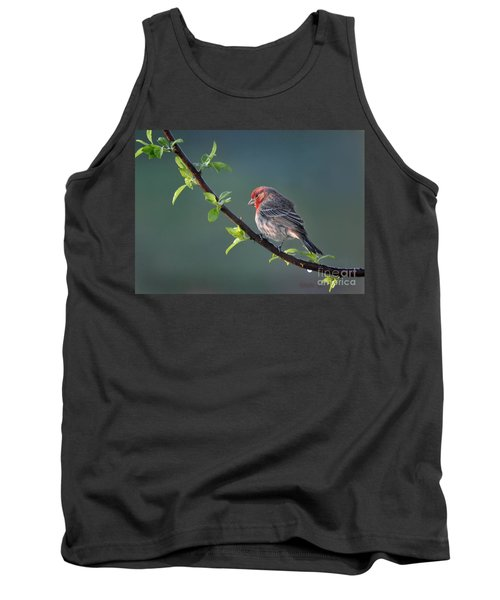 Song Bird In Spring Tank Top